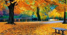 Осенние каникулы в Казани 2019
